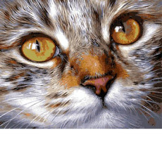 Кошачий взгляд VP1022