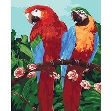 Королевские попугаи KH4051