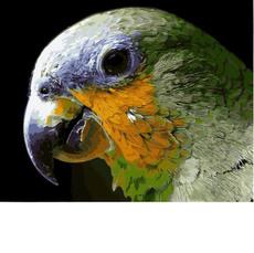 Мятный попугай MR-Q2157