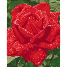 картина раскраска нежность розы идейка Kh3045 40 х 50см