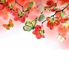 Бабочки и красные орхидеи (VK013)