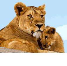 Львица с малышом VP993