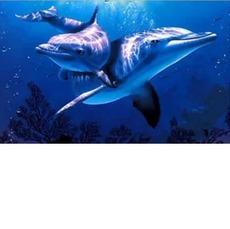 Алмазная мозаика Дельфины