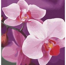 KHO3105 Картина по номерам Волшебная орхидея
