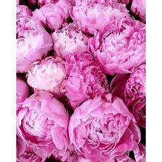 MR-Q2284 Раскраска по номерам Прелесть розовых пионов Mariposa