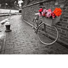 Велосипед с цветочной корзинойХуд Асаф ФранкVP695