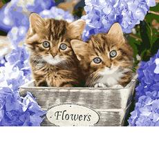 Голубоглазые котята VP933